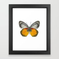 Framed Art Print featuring *Butterfly** by Mr And Mrs Quirynen