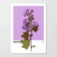 PANTONE 529 U Canvas Print