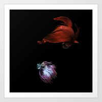 Betta No.6 Art Print