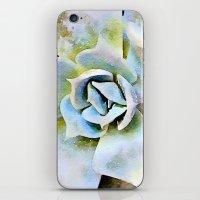 Shady Succulent iPhone & iPod Skin