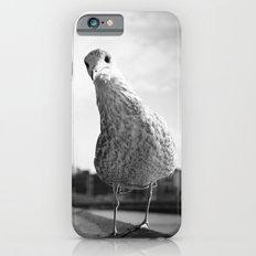 Inquisitive seagull Slim Case iPhone 6s