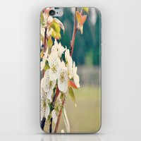 Pear Blossoms iPhone & iPod Skin