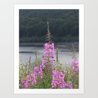 Willow Herb Art Print