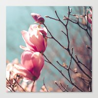 japanese magnolia Canvas Print