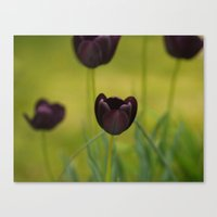 Black Tulip Field Canvas Print