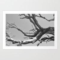 Driftwood Ladder B/W Art Print