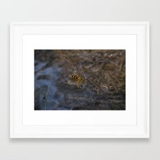 wasp over water Framed Art Print