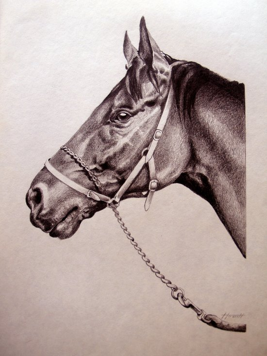 Sir Alfred - Racehorse Art Print