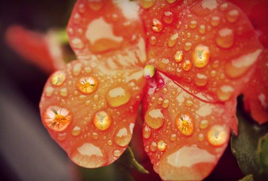 Flower Reflections Art Print