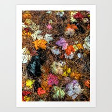 'Fall Leaves' Art Print