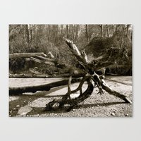 Driftwood on the Beach Canvas Print