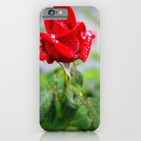 iPhone & iPod Case featuring rose with raindrops  by Theresia Pauls