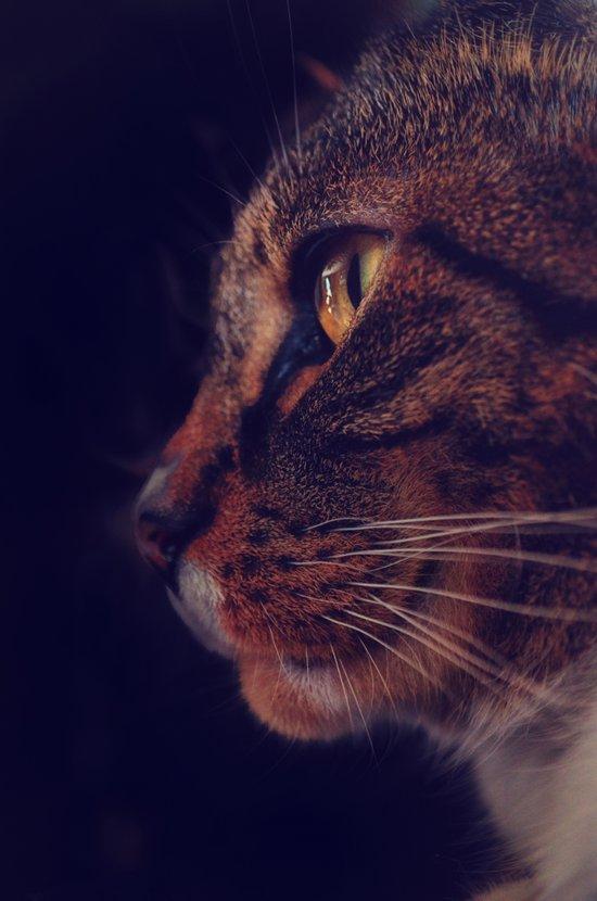 Profile of a Cat Art Print