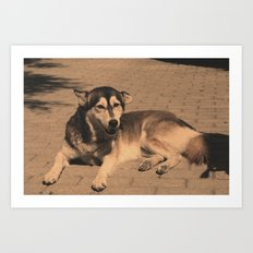 Lazy Dawg no.1 Art Print
