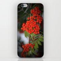 Rote Beeren iPhone & iPod Skin