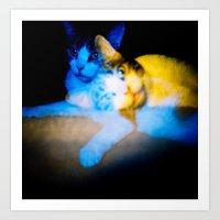Blue/Yellow Phoebe Art Print