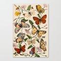 Beautiful Butterflies. Canvas Print