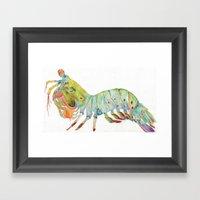 Peacock Mantis Shrimp Framed Art Print
