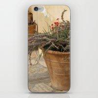 Courtyard Plants iPhone & iPod Skin
