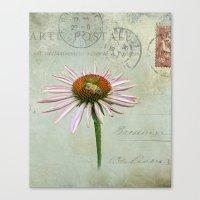 coneflower & bee postale Canvas Print