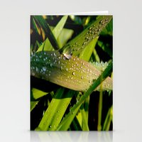 dew Stationery Cards