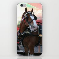 BUDWEISER Clydesdale iPhone & iPod Skin