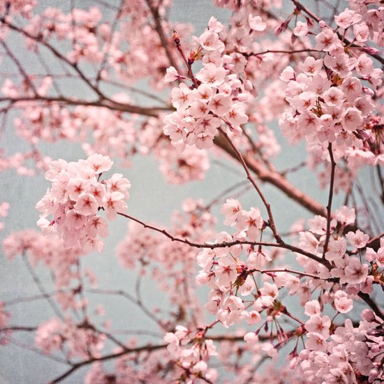 blossoms all over ~ color option pink Art Print