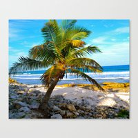 Mexican Palm Canvas Print