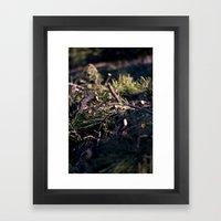 In the Pines Framed Art Print
