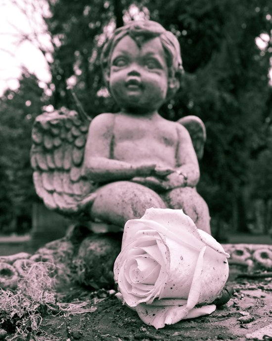 Cherub and rose Art Print