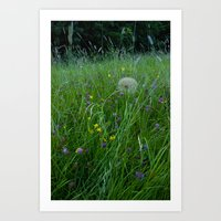 Field of flowers and Dandelions (2) Art Print