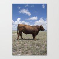 Bull, Texas Canvas Print