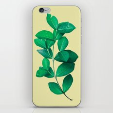 Green Leaves in Yellow background iPhone & iPod Skin