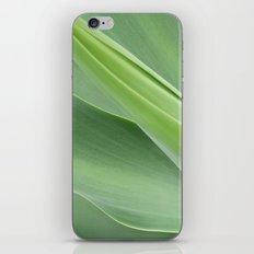 Green Agave Attenuata iPhone & iPod Skin