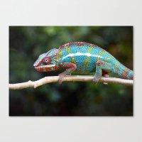 Turquoise Chameleon Canvas Print