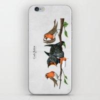 Cock Robin iPhone & iPod Skin