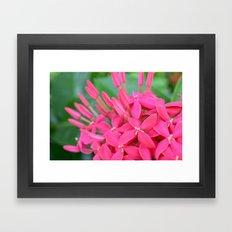 Pink Petals CR Framed Art Print