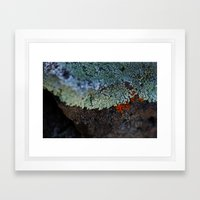 Lichen Ice Framed Art Print