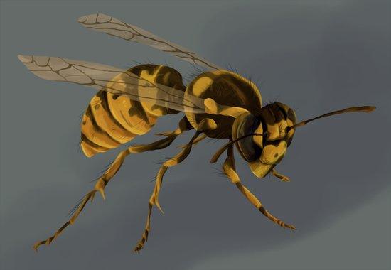 little wasp  Art Print