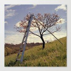 Ladder in Cherry Tree Canvas Print