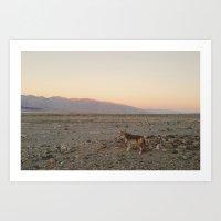 Desert Coyote Art Print