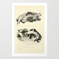 Savor Art Print