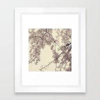 Raintree Lavender pink tree blossoms Framed Art Print