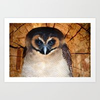 Asian Wood Owl Art Print