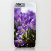 Crocuses in Snow iPhone 6 Slim Case