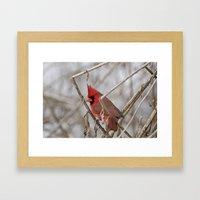 Northern Cardinal Framed Art Print