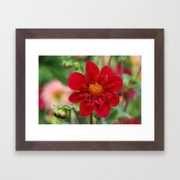 Red on a sunny day Framed Art Print