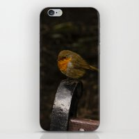 Resting Robin iPhone & iPod Skin