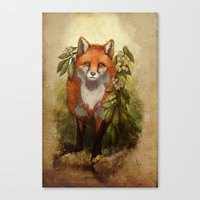 Fox [caming ou of the woods] Canvas Print