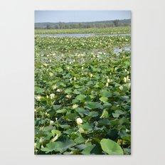 Amana Lilly Pond Canvas Print